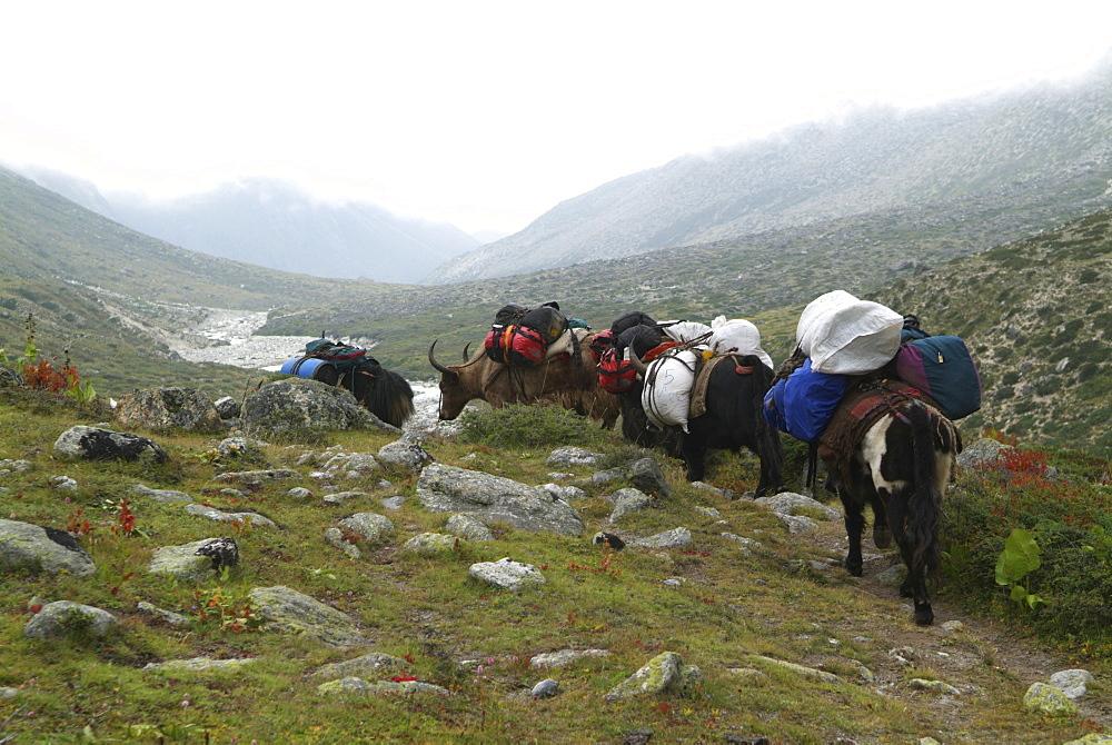 Mountain Yaks. Mountain and Clouds. Himalayas, Tibet. - 986-120