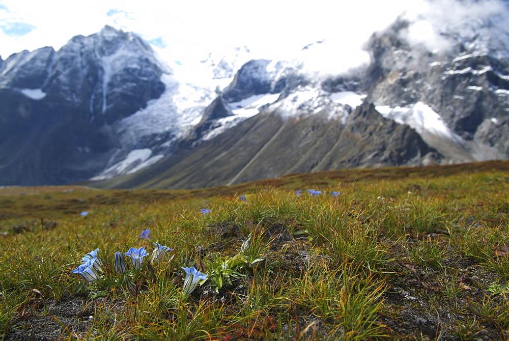 Tibetan  Mountain and Clouds. Flowers, Himalayas, Tibet. - 986-135