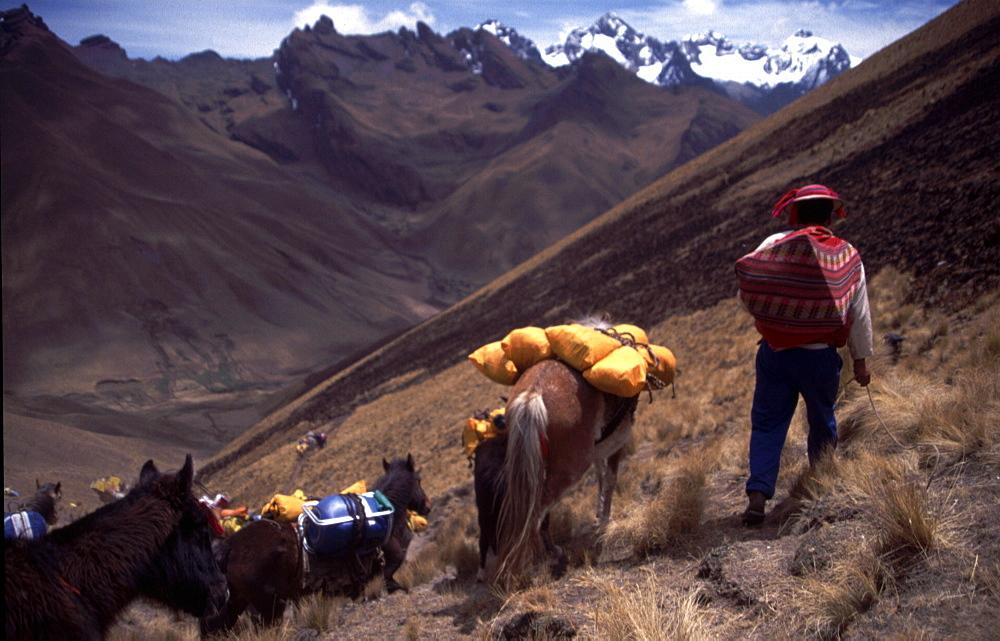 Peru -  Trek horses. Inca Trail near Machu Picchu.  - 986-84