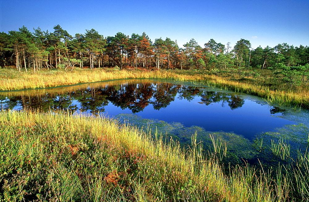 latvian landscapes, bog, kemeri np, latvia - 987-287