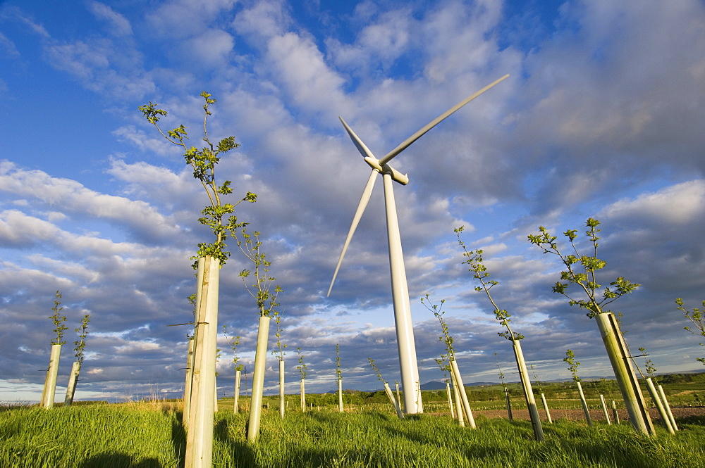Wind turbine with planted hardwood trees, Blacklaw Windfarm, South Lanarkshire, Scotland - 987-405