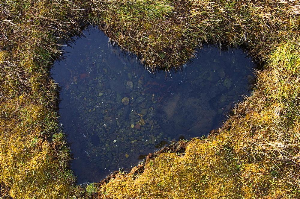 Heart-shaped pool on saltmarsh, Scotland