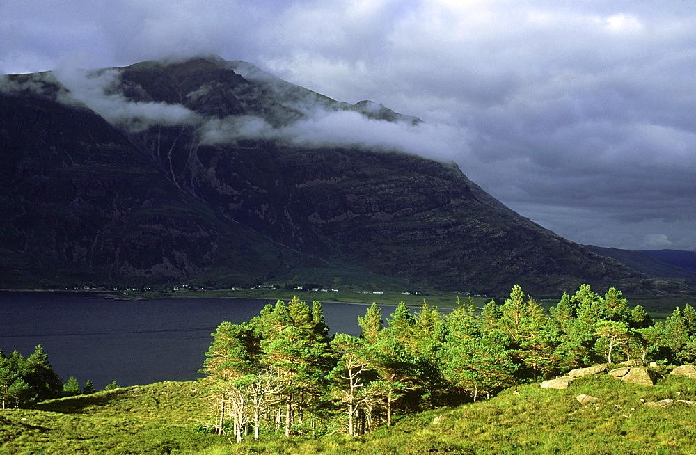 scots pine: pinus sylvestris remnant woodland nr torridon, scotland