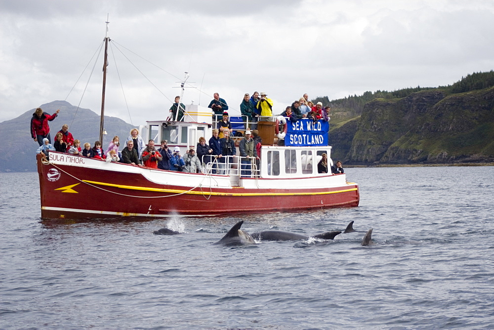 Marine wildlife-watching boat.  Encounter with bottlenose dolphins (Tursiops truncatus).  Hebrides, Scotland - 988-192