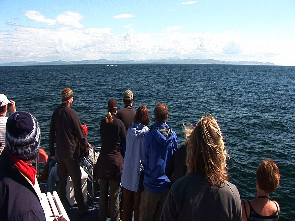 Whale watchers on boat.  Inner Hebrides. UK. 22/07/08 - 988-477