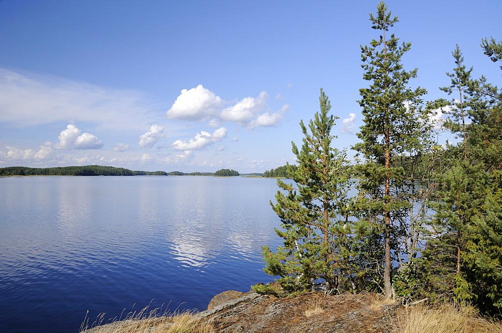 Young Scots pine trees (Pinus sylvestris) growing near rocky shore of Lake Saimaa, near Savonlinna, Finland, Scandinavia, Europe