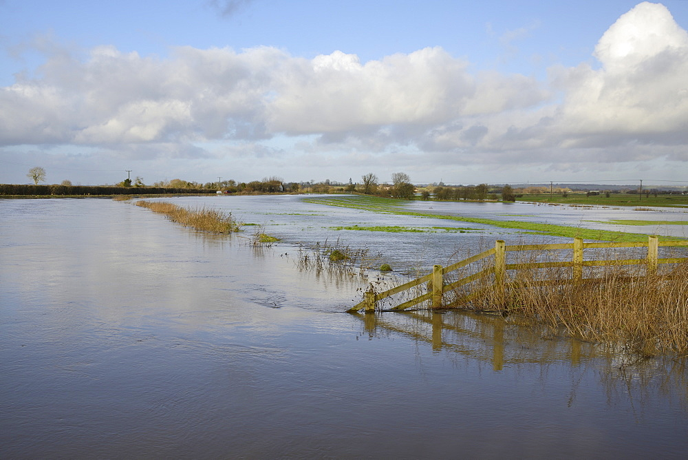 Hugely swollen River Parrett overflowing onto Aller Moor near Staithe after weeks of heavy rain, Somerset Levels, Somerset, England, United Kingdom, Europe - 989-321