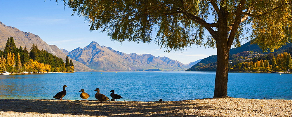 Autumnal Lake Wakatipu at Queenstown, Otago, South Island, New Zealand, Pacific