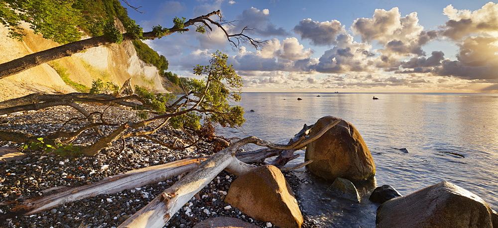 Chalk cliffs, Jasmund National Park, Ruegen, Mecklenburg-Western Pomerania, Germany