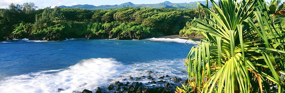 Hawaii, Maui, Hana, Waianapanapa State Park, Black Sand beach, Lauhala tree in foreground.
