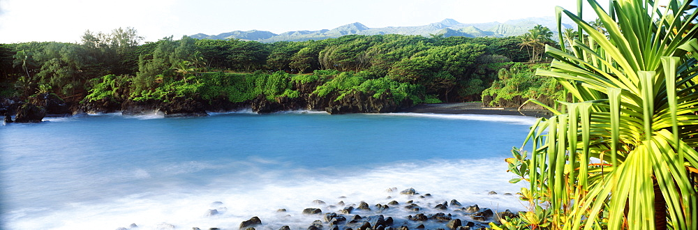Hawaii, Maui, Hana, Waianapanapa State Park, Lush green foliage and frothy ocean on lava rocks.