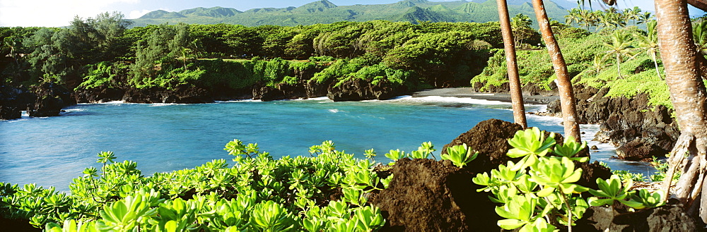 Hawaii, Maui, Hana, Waianapanapa State Park, Black sand beach and lush greenery.