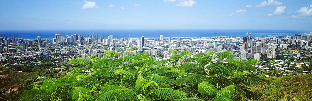 Hawaii, Oahu, Honolulu, Panoramic view of city buildings and greenery from Tantalus Lookout.