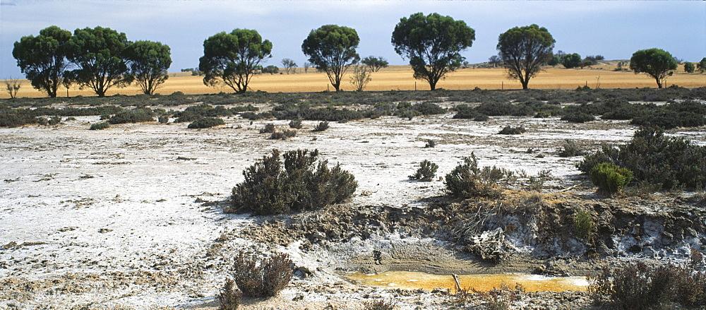 Salinization, australia. Western australia, vicinity perth. Soil erosion. Panoramic