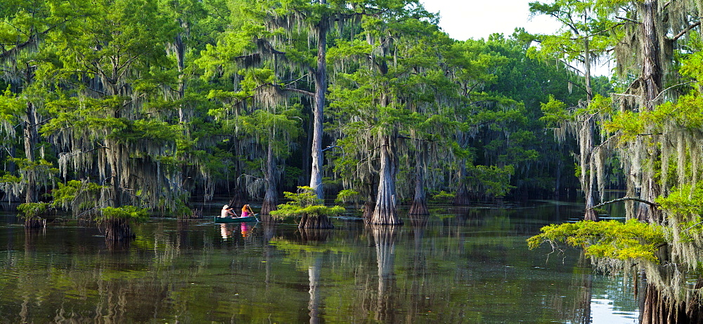 Caddo Lake, Texas, United States of America, North America