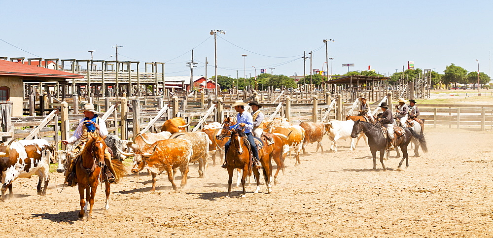 Cowboys in Fort Worth Stockyards, Texas, United States of America, North America - 1207-91