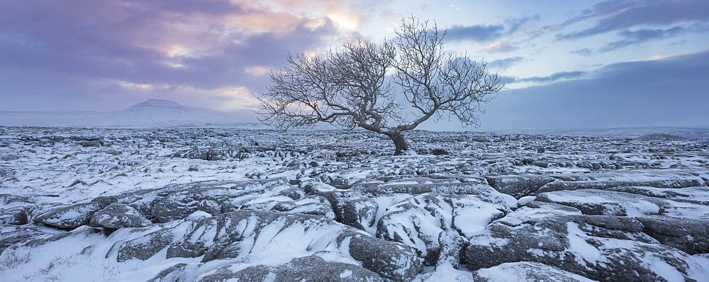 View to Ingleborough Hill from Twisleton Scar at sunrise in winter, Ingleton, Yorkshire Dales National Park, North Yorkshire, Yorkshire, England, United Kingdom, Europe
