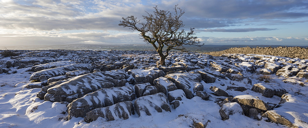 Hawthorn Tree and Limestone pavement in winter snow at sunrise Twisleton Scar, Ingleton, Yorkshire Dales, North Yorkshire, UK - 1266-84