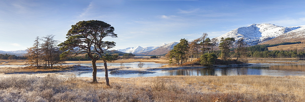 Winter scenery of Scots pines and frosted grasses at Loch Tulla, Bridge of Orchy, Highlands, Scotland, United Kingdom, Europe - 1266-92