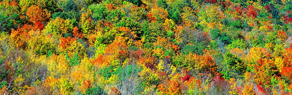 Fall Foliage Catskill Park NY USA