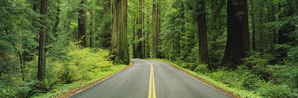 Empty road passing through a forest, Grizzly Creek Redwoods State Park, California, USA