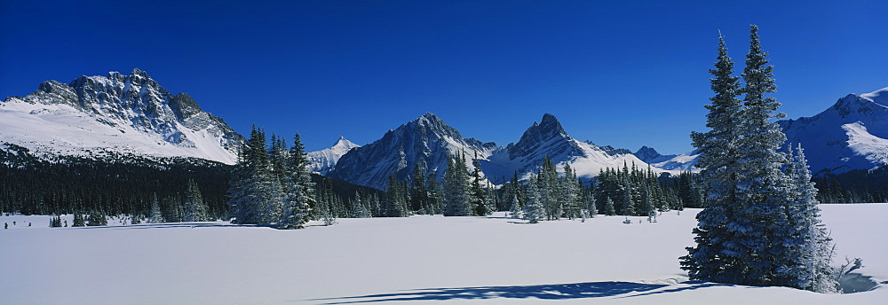 Trees on a snow covered landscape, Astoria Valley, Jasper National Park, Alberta, Canada