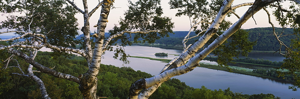 High angle view of a tree with a river in the background, Mississippi River, Perrot State Park, Wisconsin, USA