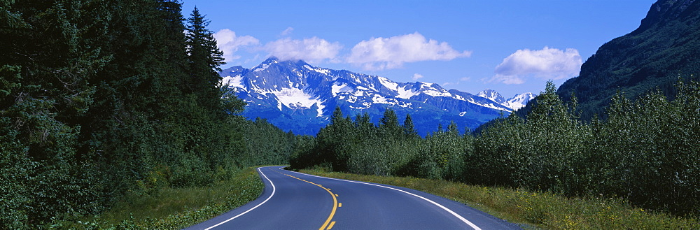 Plants on both sides of a road, Glacier Road, Kenai Mountains, Kenai Peninsula, Seward, Alaska, USA - 752-1693