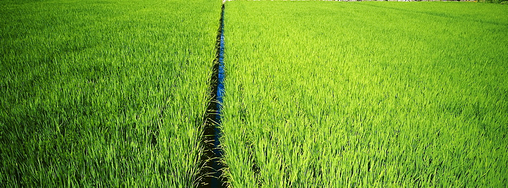 High angle view of a rice field, Matsuzaki, Japan - 752-1702