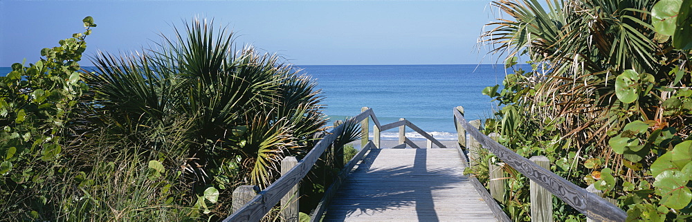 Plants On Both Sides Of A Boardwalk, Caspersen Beach, Venice, Florida, USA - 752-1748