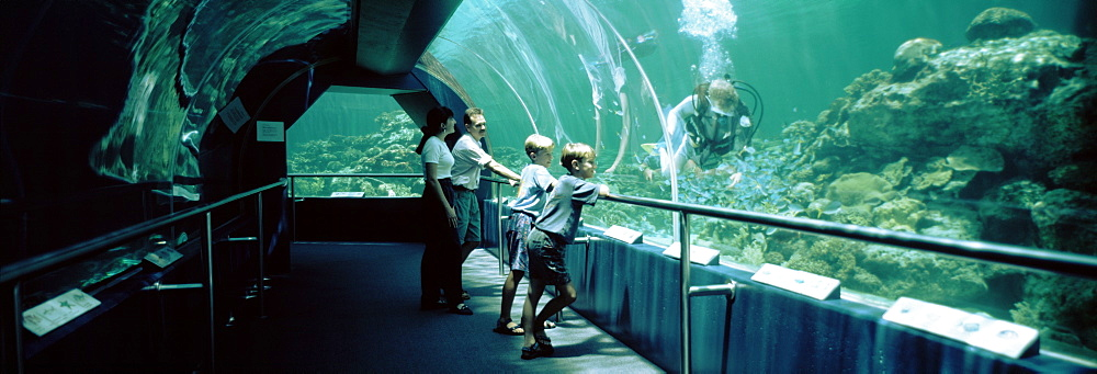 Australia, Townsville, Underwaterworld, Side profile of a family watching a scuba diver in an aquarium - 752-1760