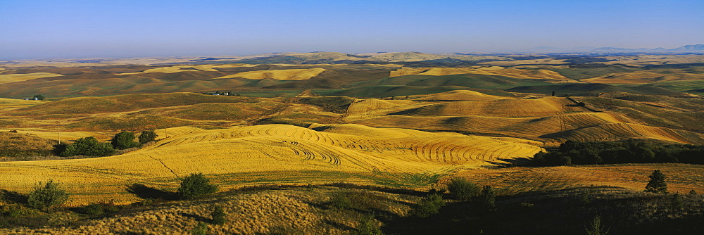 Harvested wheat field on a landscape, Palouse Region, Whitman County, Washington State, USA - 752-1767