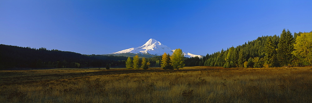 Panoramic view of a mountain, Mt Hood, Oregon, USA - 752-1784