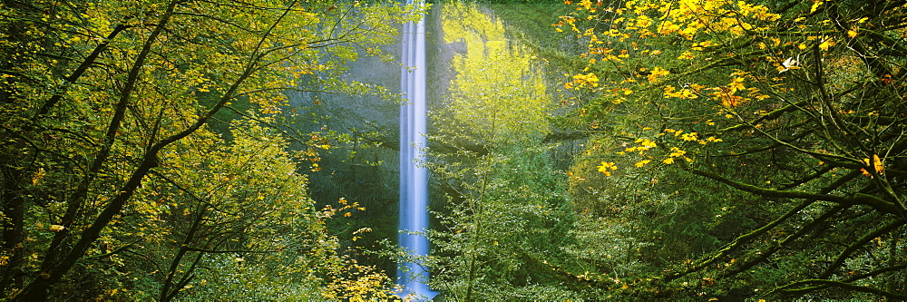 Waterfall in a forest, Latourell Falls, Columbia River Gorge National Scenic Area, Oregon, USA - 752-1791