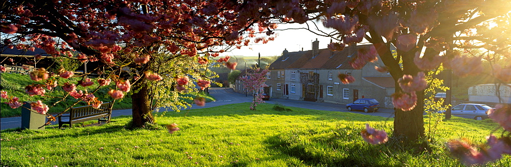 Trees On A Lawn, Muston Village, North Yorkshire, England, United Kingdom - 752-1837