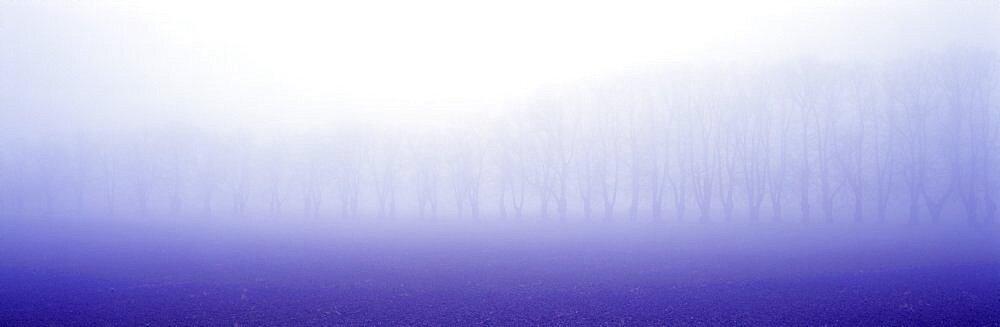 Trees Fog Uppland Sweden  - 752-227