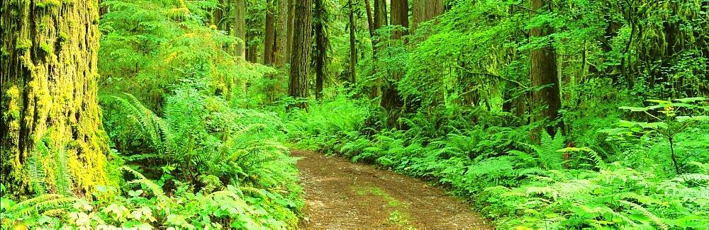 Trail Rockport State Park WA USA
