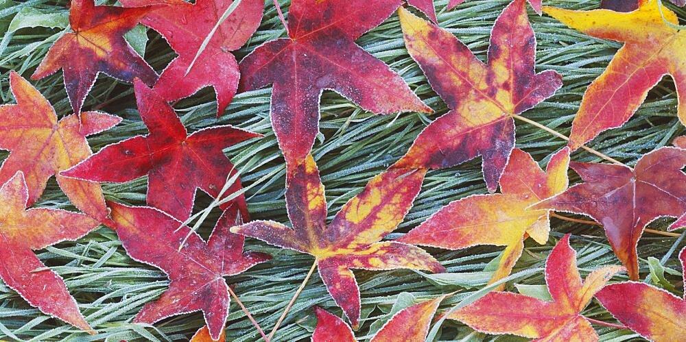 High angle view of leaves on grass, Sacramento, California, USA