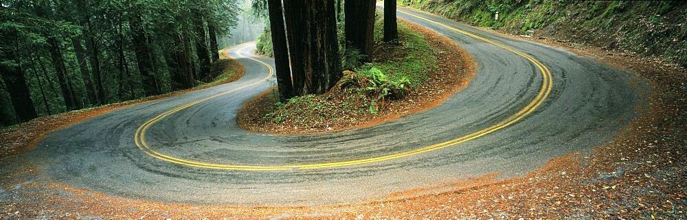USA , California, Marin County, road