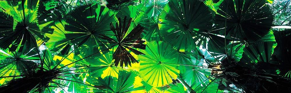 Foliage Queensland Australia