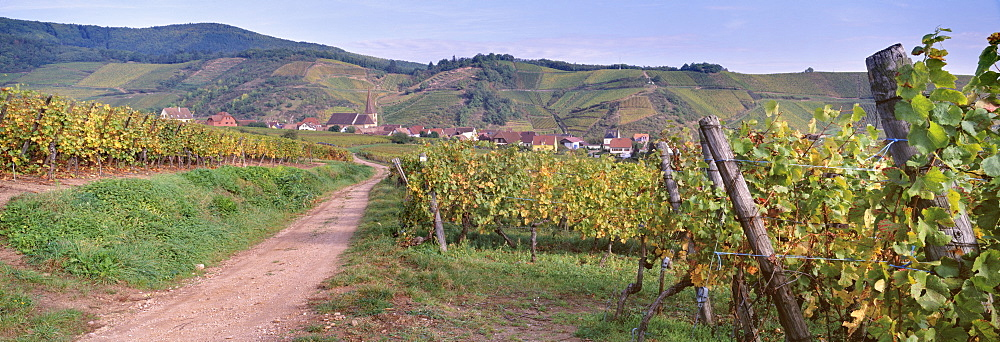 Niedermorschwihr, village of the Alsatian Wine Road, from the vineyards, Haut Rhin, Alsace, France, Europe - 770-1775