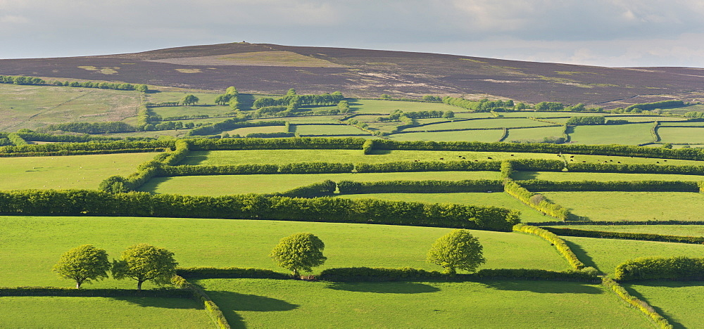 Patchwork rolling countryside below Dunkery Beacon, Exmoor, Somerset, England. Spring (May) 2016.