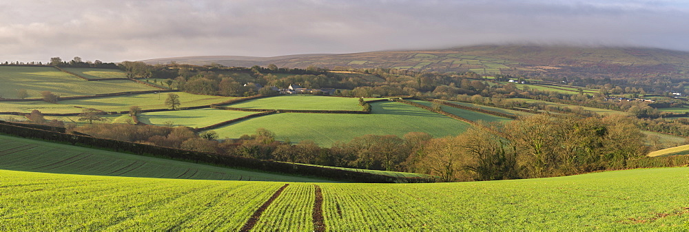 Rolling farmland near South Tawton in winter, Dartmoor National Park, Devon, England, United Kingdom, Europe - 799-3488