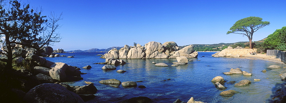 Pine tree on the beach, rock formation, Palombaggia Bay, East Coast, Corsica, France, Europe
