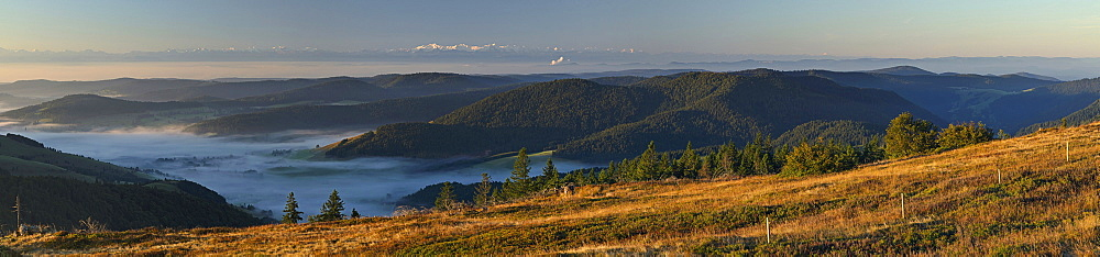 Swiss Alps, view from the Black Forest, Baden-Wuerttemberg, Germany, Europe