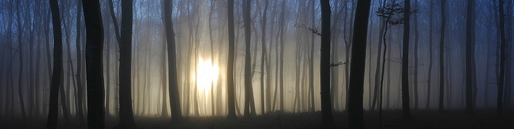 Sun shining through a fog-filled forest, Swabian Alb, Baden-Wuerttemberg, Germany, Europe