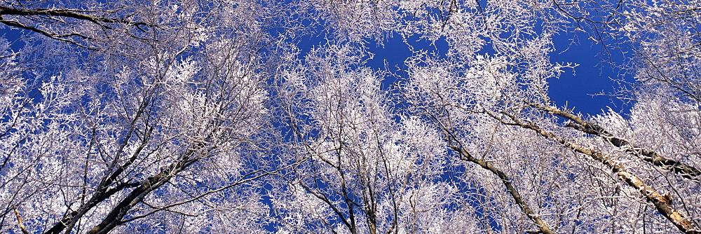 Hoar frost in winter on the Swabian Alb, Baden-Wuerttemberg, Germany, Europe