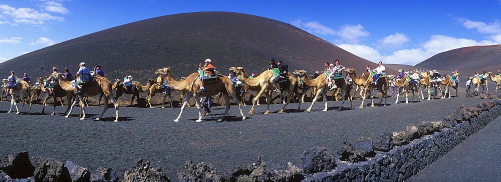 Tourists riding camels in Montana del Fuego de Timanfaya National Park, Lanzarote, Canary Islands, Spain, Europe