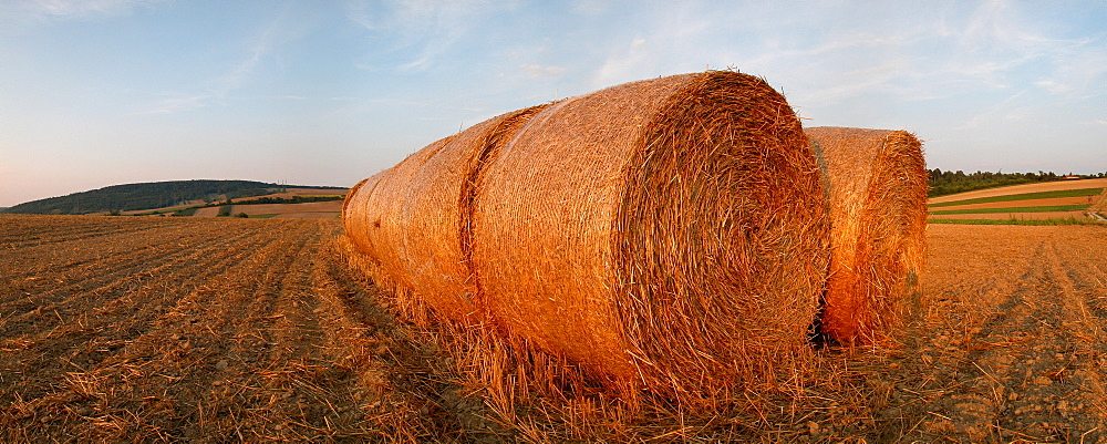 Straw ball on a field in the summer