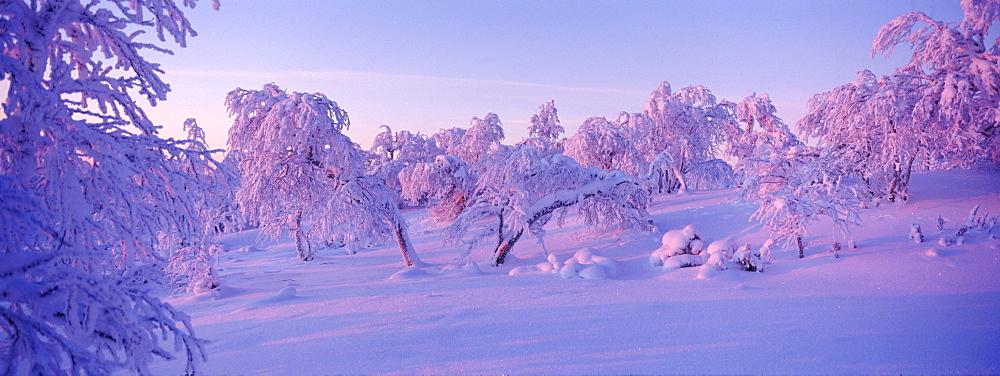 Winter landscape, Lappland